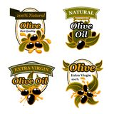 Olive oil label set with black fruit and splash. Olive oil label and badge set with black olive fruit and oil splash. Olive tree branch with ripe fruit and green Royalty Free Stock Photo