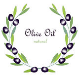 Olive Oil label, olive branch wreath with green leafs and black fruits on white Royalty Free Stock Image