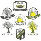 Olive oil labels and design elements Stock Images