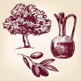 Olive oil with olives set hand drawn vector Stock Images