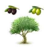 Olive oil primary products set. Olive oil production traditional primary products pictograms set of green and black olives abstract isolated vector illustration Stock Image