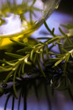 Olive oil with rosemary Royalty Free Stock Photography