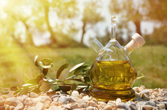 Olive oil. Sirmione, Italy. Olive oil in the bottle. Sirmione, Italy Stock Photos
