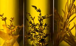 Olive oil with spices and herbs. Royalty Free Stock Photos