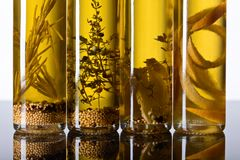 Olive oil with spices and herbs. Stock Photos