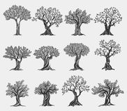Olive oil trees logo isolated, agriculture icons stock illustration