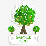 Olive oil. Vector  olive tree. For labels, pack Stock Images
