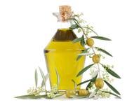 Olive, olio e una filiale Fotografie Stock Libere da Diritti