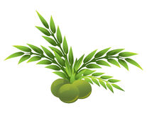 Olive and olive leaf Royalty Free Stock Image