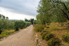 Olive Orchard i Provence Fotografering för Bildbyråer