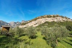 Olive Orchard in valle di Sarca - Trentino Italia Immagine Stock