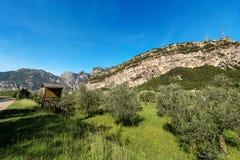 Olive Orchard in valle di Sarca - Trentino Italia Immagine Stock Libera da Diritti