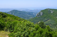 Olive orchards in the hills - Corfu, Greece Royalty Free Stock Photography