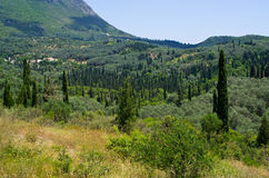 Olive orchards in the hills - Corfu, Greece Stock Images