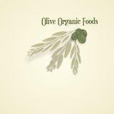 Olive Organic, vector Royalty Free Stock Photos