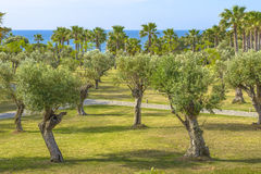 Olive and Palm trees Royalty Free Stock Photography