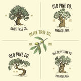Olive and pine tree logos engraved or hand drawn,  old looking emblem for ecology, camping or food branding Royalty Free Stock Photography