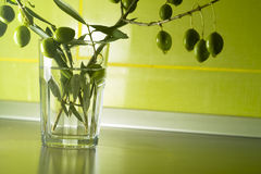 Olive plant in glass. Olive plant in kitchen background Royalty Free Stock Photography