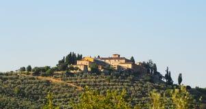 Olive Plantation Royalty Free Stock Photo