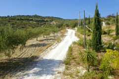 Olive plantation and line of cypress. Way on sicilian hills between olive plantation and line of cypress stock images