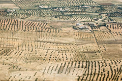 Olive plantation in Tunisia Royalty Free Stock Images