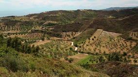 Olive plantations near Nea Skioni village on Kassandra peninsula, Greece stock video