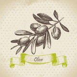 Olive. Hand drawn illustration Royalty Free Stock Photos