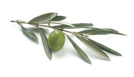 Olive's branch Stock Images