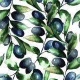 olive s de branchement illustration stock