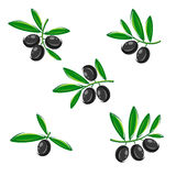 Olive set. Vector Stock Photography