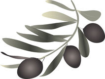 Olive sprig Royalty Free Stock Photo
