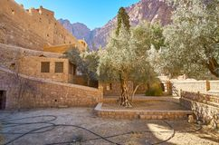 Olive in st Catherine Monastery, Sinai, Egitto fotografia stock libera da diritti