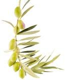 Olive su una filiale Fotografia Stock