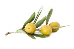 Olive sui rami di ulivo Fotografie Stock