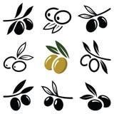 Olive symbol Royaltyfria Foton