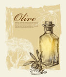 Olive tirée par la main Photographie stock libre de droits