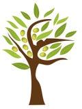 olive tree Royaltyfri Bild