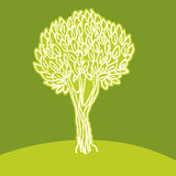 Olive tree. Colour illustration of olive tree Stock Photos