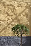 Olive tree against stone wall Royalty Free Stock Photos