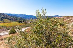 Olive tree on the background of mountains, Siurana de Prades, Tarragona, Spain. Copy space for text. Olive tree on the background of mountains, Siurana de royalty free stock images