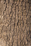 Olive tree  bark Royalty Free Stock Photography