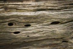 Olive Tree Bark Imagen de archivo
