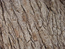 Olive Tree Bark Stockfotografie