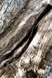 Olive Tree Bark Imagenes de archivo