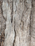Olive tree bark Background Stock Images