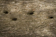 Olive tree bark Stock Photography