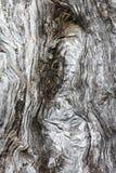 Olive Tree Bark Royalty Free Stock Photos