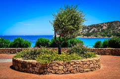 Olive tree in beautiful garden at ocean coast Stock Photography