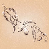 Olive tree branch. Hand drawn sketch Royalty Free Stock Photography