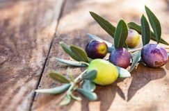 Olive tree branch. Olive branch on rustic wooden table Stock Images